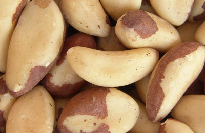 Going batty for Brazil nuts