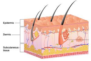 back skin diagram dry skin diagram beautysouthafrica - skin & body - dry skin remedies #13
