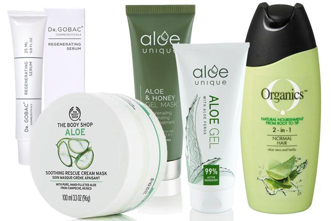 Aloe, aloe! 1